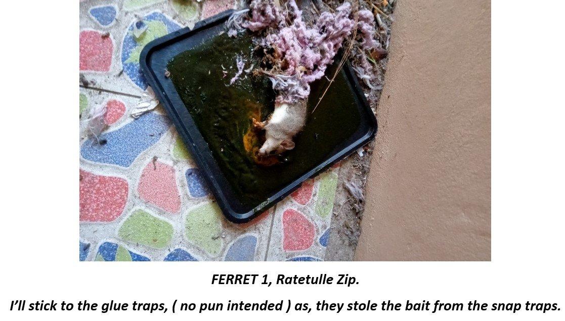 Rat trap..jpg